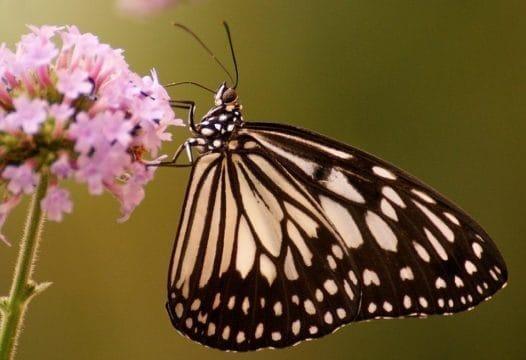 butterfly-1559851_960_720